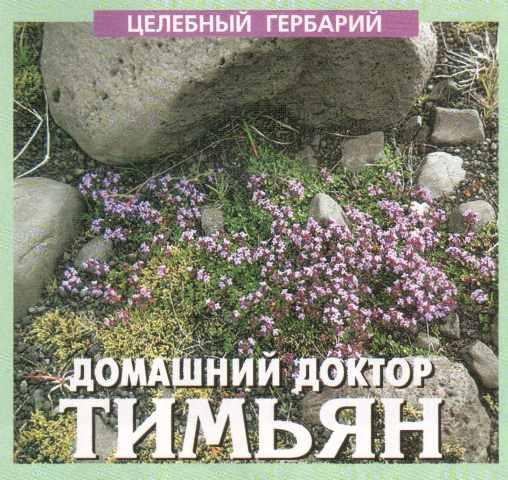 тимьян ползучий