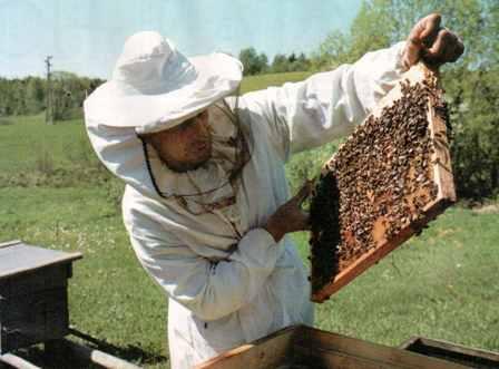 Апитерапия: волшебная сила пчелы