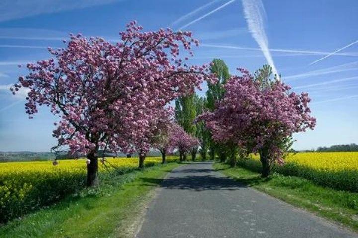 Когда деревья в цвету