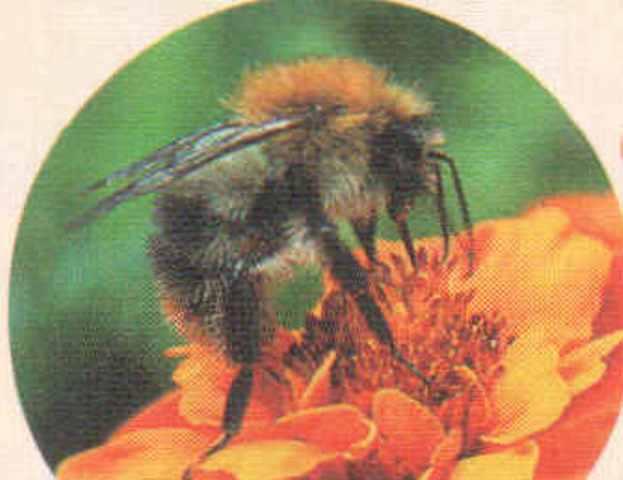 Боль в суставах лечит пчела