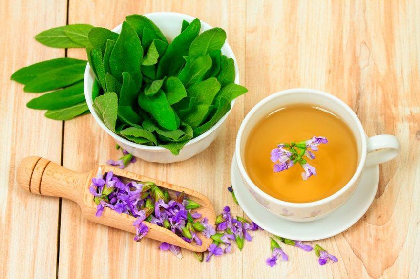 Лучшие рецепты из полезного шалфея: как приготовить чай, полоскание для горла и масло?